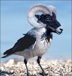 Ram + Seagull
