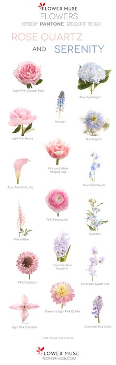 2016 Pantone Color of the Year - Rose Quartz and Serenity - Flower Inspiration. See it on Flower Mus Arrangements Ikebana, Floral Arrangements, Arte Floral, Colorful Flowers, Beautiful Flowers, Boquette Flowers, Flowers Nature, Wedding Bouquets, Wedding Flowers