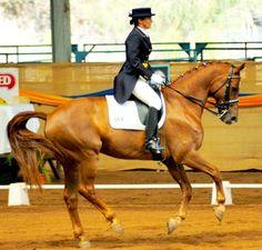 http://misslilatlanta.hubpages.com/hub/Standard-Horse  Absolute adoration - Dressage and a STANDARDBRED strutting its stuff!