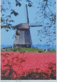 Windmill - Netherlands