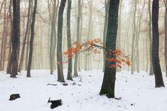 "Snowy forest winter landscape - framed photo prints - digital - outdoor wall art - nature photography - decor - ""Winter Woods X."" - SKU0057"