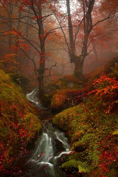 New Photography Nature Autumn Scenery 48 Ideas Beautiful World, Beautiful Places, Autumn Scenes, All Nature, Pretty Pictures, Land Scape, Beautiful Landscapes, The Great Outdoors, Mother Nature