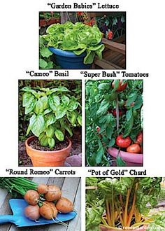 "Renee's Garden Easy-to-Grow Container Kitchen Garden Collection: Contains 5 individual packets of easy-to-grow, great tasting, compact vegetable varieties especially chosen for container growing. Includes our step-by-step ""How To"" brochure."