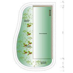 Ecopool Flora Natürliche Form (Stehendes Gewässer)