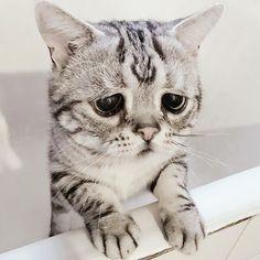 (c)instagram/lanlan731 何か辛いことがあった時に、猫のかわいい画像をみて癒されたという経験がある方は…