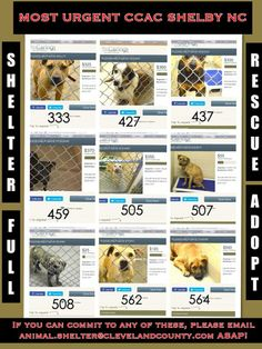 MOST URGENT, FIRST TO BE PTS IF NO ONE STEPS UP! SHELBY, NC EACH DOG HAS FUNDS RAISED.  COME ON, PEOPLE! https://www.facebook.com/photo.php?fbid=650925331609312&set=a.295849103783605.61154.285283128173536&type=1&theater