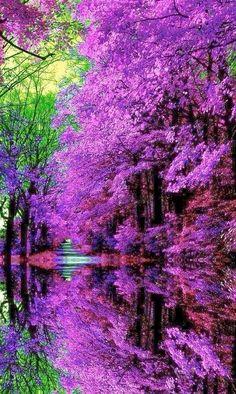 Hermosa Naturaleza!