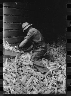 Emptying a corn crib in order to shell the corn for EverNormal granary storage, Grundy County, Iowa, Photographer Arthur Rothstein, September 1939