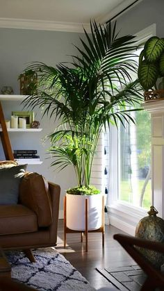 House Plants Decor, Plants In Living Room, Plants In Bedroom, Plants In The Home, Tropical House Plants, Plant Rooms, Living Rooms, Living Walls, Living Spaces