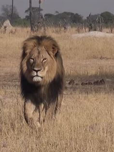 Rest in peace, Cecil
