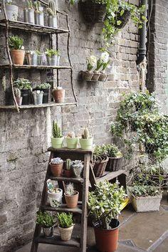 11 Urban Garden Ideas For Tiny City Spaces - Balcony Garden Rustic Gardens, Outdoor Gardens, Succulents Garden, Planting Flowers, Potted Garden, Flowers Garden, Terrace Garden, Garden Pots, Garden Trees