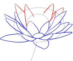 how to draw a water lily step 5