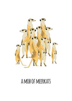A Mob of Meerkats by Red Parka