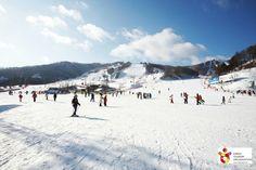 Korea_Phoenix Park skiing ground(휘닉스파크 스키장)