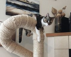 The folks over at CatastrophiCreations haveoutdone themselves this time! Just look at these awesome sisal wrapped cat climbers and scratchers. How cool are these? First we have a Dr. Suessian sisal cat tree. Twisting pipes are covered in thick natural sisal rope, creating a vertical pole for climbing straight up and a nice easy ramp…