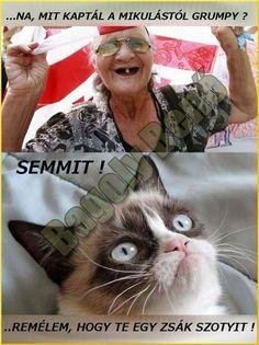 Puns, Lol, Grumpy Cat, Memes, Animals, Clean Puns, Animales, Animaux, Meme