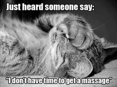 Funny, cute, wonderful animal pictures and videos. Massage Meme, Love Massage, Massage Quotes, Getting A Massage, Massage Therapy, Black And White Photography, Animal Pictures, Picture Video, Funny Cats