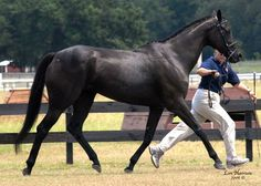 black thoroughbred mare - christmas list?