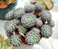 I love succulent clusters like this.