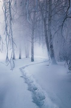"""""""Whose woods these are I think I know / his house is in the village though / he will not see me stopping here / to watch his woods fill up with snow"""" #nature"""