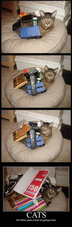 Check out all our Cats Just Dont Care funny pictures here on our site. We update our Cats Just Dont Care funny pictures daily! Crazy Cat Lady, Crazy Cats, I Love Cats, Cute Cats, Funny Animals, Cute Animals, Baby Animals, Here Kitty Kitty, Kitty Cats