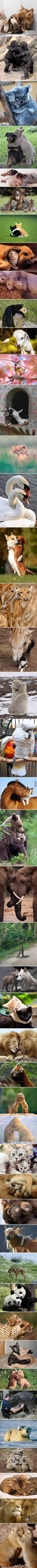 Adorable animals hugging, in case you are having a bad day - 9GAG