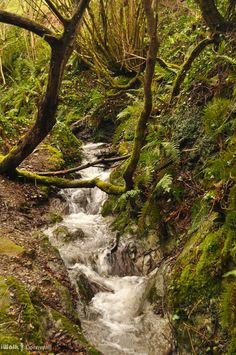 Stream near Lansallos in West Coombe ~ Cornwall, England