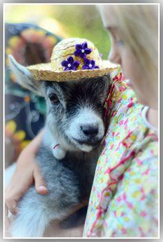 "baby ""nanny"" goat in her Sunday bonnet."