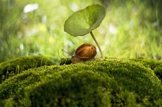 """""""Under my umbrella. ella"""" by Antonio Bernardino Coelho. Coelho's photo, taken in Porto, Portual, uses the bokeh effect, which makes the snail and plant in the foreground look sharp while the background is blurry. Photography Sites, Photography Awards, Macro Photography, Photography Contests, Weird And Wonderful, Wonderful Images, Places Around The World, Around The Worlds, Bokeh Effect"""