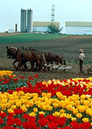 Google Image Result for http://www.padutchcountry.com/Uploads/Members/Amish_Country_Tours/Main/amish_country_tours_member.jpg