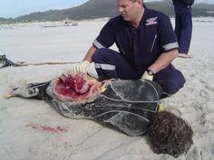 deadly shark attack