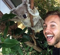 DJ Calvin Harris got cuddly with a cute koala Down Under, as well a wide-eyed owl, as he strolled around a Sydney wildlife park. Calvin Harris, Dj Calvin, Koala Marsupial, The Wombats, Wildlife Park, Cute Creatures, Kittens Cutest, Cute Puppies, Animal Pictures