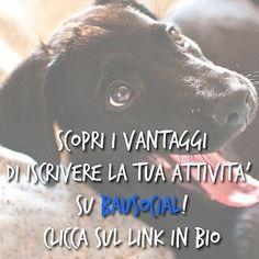 Iscrivi la tua attività su BauSocial scopri tutti i i vantaggi cliccando sul link che trovi nel nostro profilo qua su Instagram. . . #BauSocial #Milano #cane #cani #dog #dogs #mydog #dogoftheday #instadog #Bau #puppy #tbt #marketing #socialmedia #toelettatura #petsitter #dogsitter #photooftheday #beautiful #amazing #cute #veterinario #vet  #italia #torino #bologna