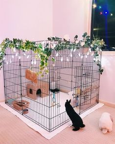 Neue Pet Rabbit Indoor Bunny Cages Ideen You are in the right place about dog kennel indoor diy Here Animal Room, Bunny Room, Bunny Cages, Cages For Rabbits, Mini Lop, Pet Rabbit, Rabbit Cage Diy, Diy Bunny Cage, Rabbit Pen