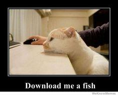 Cats!...:)