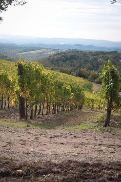 Terra di Seta (Castelnuovo Berardenga, Italy): Top Tips Before You Go - TripAdvisor