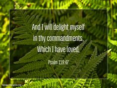 And I will delight myself in thy commandments, Which I have loved. Psalm 119:47 http://www.twosparrowspress.com/2016/06/psalm-119-47/ #Psalm119 #Christian #God #Bible #TwoSparrowsPress