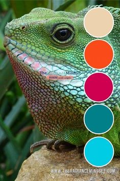 The color green in marketing is one of balance, calm, and harmony. It's made from blue (a color of security and trust) and yellow (optimism). Orange Color Palettes, Red Colour Palette, Colour Schemes, Color Combinations, Complementary Color Wheel, Marketing Colors, Fabric Houses, Social Media Graphics, Green Colors