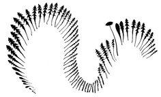 metamorphose van platonische lichamen - Google zoeken