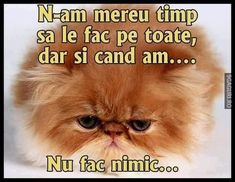 N-am mereu timp să le fac pe toate Motto, Dog Cat, Comedy, Funny Memes, Humor, Cats, Movies, Crushed Stone, Gatos