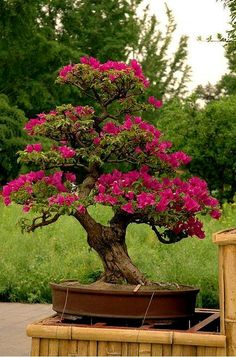 ♣☺Some #bonsai inspiration for today!֍☺       #BonsaiInspiration