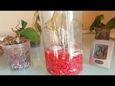 YouTube - Hasta Orkideler 4 ve Yöntemler Glass Vase, Channel, Youtube, Home Decor, Interior Design, Home Interior Design, Youtubers, Youtube Movies, Home Decoration