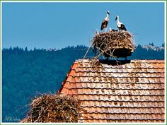 Altreu Stork Colony - biked from Solothurn to Buren an de Aare. This is the halfway spot. Lots of storks! Cinque Terre Italy, Storks, Switzerland, Colonial, Fair Grounds, Travel, Solothurn, Viajes, Destinations