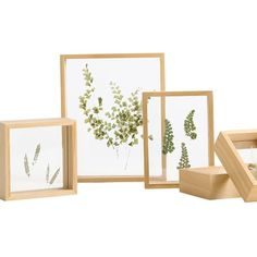 Wooden Float Frame from Apollo Box is part of Floating frame - Order Wooden Float Frames for pressed botanical art Available in five different sizes Find stylish home decor at the Apollo Box Floating Picture Frames, Floating Frame, House Plants Decor, Plant Decor, Apollo Box, Tips And Tricks, Botanical Wall Art, Wood Display, Flower Frame