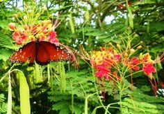 butterfly gardening made simple - Florida Butterfly Garden