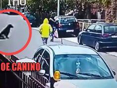 Un perro sin hogar rescató a una mujer cuando fue atacada por un delincuente que quería arrebatarle sus pertenencias. Just Amazing, Dogs, Animales, Home, Women
