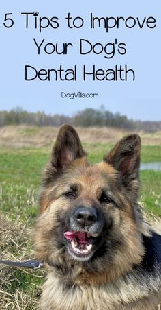 We'll help you nip dental disease in the bud by sharing with you a few tried and tested tips to improve your dog�s dental health.Let�s get started!