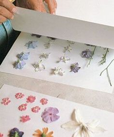 Sort fresh flowers by type, and arrange them face down, making sure that none of the blooms are touching. Sandwich the blooms between sheets of paper, which will absorb the flowers' moisture during the drying process.