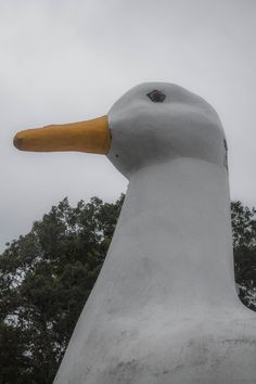 A different angle of The Big Duck, Flanders, NY (10/03/2015)