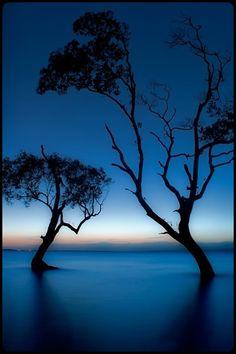 Mangrove trees dancing at dawn..